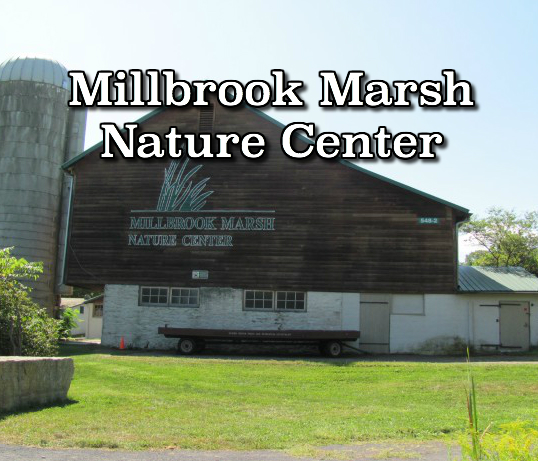 1465635489millbrookmarshnaturecenter21.jpg