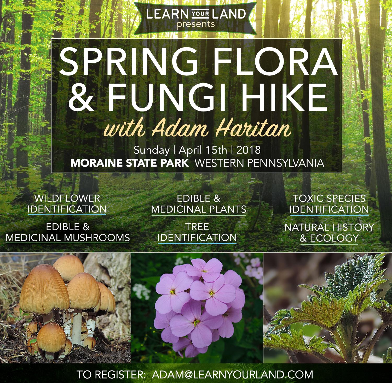 SpringFloraFungiHike