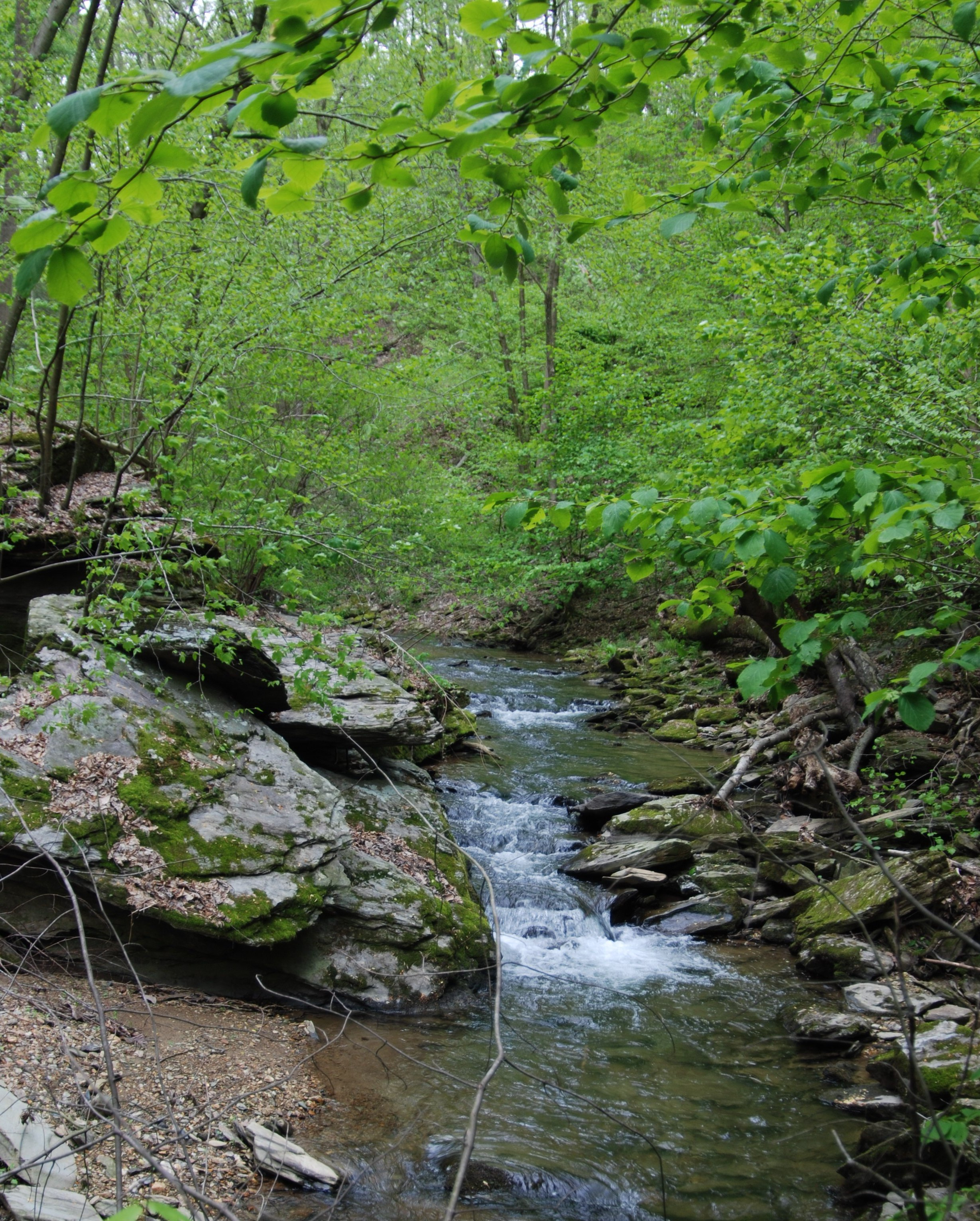 Saving Natural Lands & Protecting Our Watershed